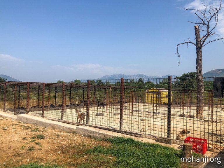 ACT-Crna-Gora-posetio-sklonište-Azil (12)