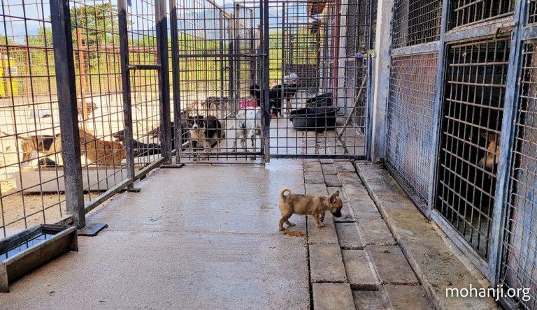 ACT-Crna-Gora-posetio-sklonište-Azil (2)